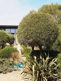 Small Picture 1162 best Australian Garden Design images on Pinterest