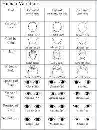 Eye Color Genetic Chart A Crash Course In Ball Python