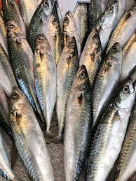 Uskumru Taze | Balık Ye - Denizden Sofranıza Aynı Tazelikte