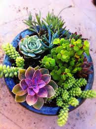 Best 25 Succulent Containers Ideas On Pinterest  Succulent Succulent Container Garden Plans