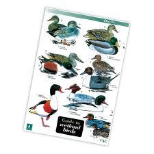 Field Guide To Wetland Birds