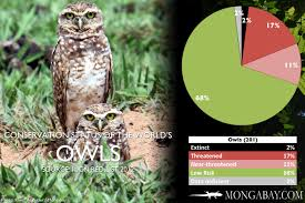 Chart The Worlds Most Endangered Owls
