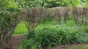 Znalezione obrazy dla zapytania bushes