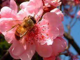 Αποτέλεσμα εικόνας για flower with bee