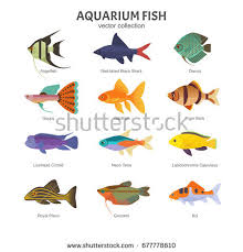 different types of fish. aquarium freshwater fish set. vector illustration of different types fish, such as angelfish e