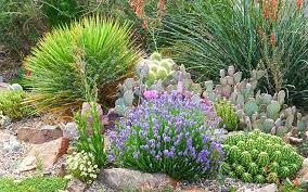 gardening with cold hardy cacti high