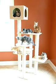 cat trees for sale. Cat Tree Ideas Cool Trees For Sale In Best Proof Christmas
