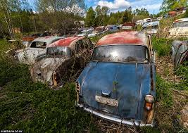 vintage inside this forest lies 1 000 forgotten cars from the 1950s a vintage car