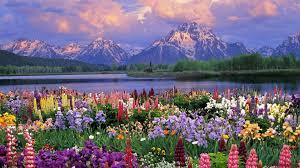 flower gardens pictures. Collection Flower Gardens Pictures Home Design Ideas. Interior Freshome. Designer N