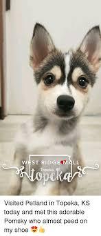 today adorable and pomsky west ridge topeka ks mall