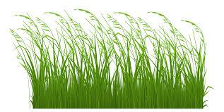 Tall Decorative Grass Decorative Grass Clipart Picturepngm1399672800
