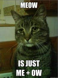 depressed cat - Album on Imgur via Relatably.com