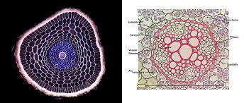 the microscopic beauty of plants and