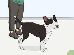 wikihow pet