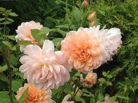 21 лучших изображений доски «rosebook» | Розы, Цветы ...