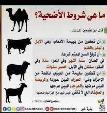"""حياد auf Twitter: """"ماهي شروط الأضحية ؟… """""""