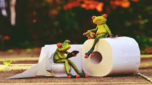 Image result for frog with toilet paper