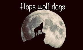 Hope wolf dogs - Home | Facebook