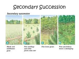 Primary Succession And Secondary Succession Venn Diagram Warm Up Complete The Following Venn Diagram In Your
