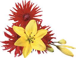 Resultat d'imatges de flores  deshojadas