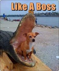 Like a Boss! on Pinterest | Meme, Boss and Meme Faces via Relatably.com