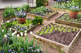 Small Picture Building A Small Vegetable Garden Best Garden Reference