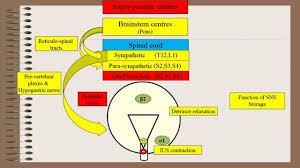 neurogenic control of urinary bladder