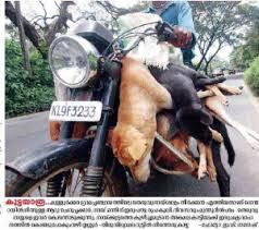 Kerala – Please Sign NOW ! | Serbian Animals Voice (SAV)