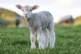 real baby farm animals. Modren Baby March 31 For Real Baby Farm Animals