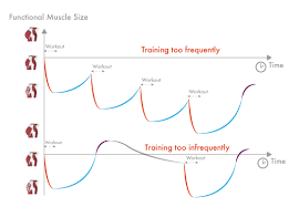Muscle Recovery Time Chart Your Optimal Training Frequency For The Glutes Part I