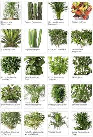 tropical office plants. Indoor Plants With Names Tropical Office A In Urdu P