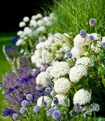 Small Picture Garden border of Hydrangea Annabelle Agapanthus Salvia Mainacht