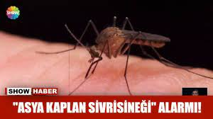 """Asya Kaplan Sivrisineği"""" alarmı! - YouTube"""