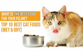 Cat Food Carbohydrate Chart 10 Best Cat Foods In 2019 Guide Reviews Of Top Dry Wet