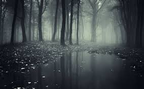 dark forest wallpaper hd pics for mobile phones adorable