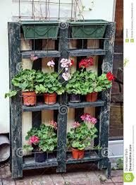 Blumentöpfe Mit Blumen Und Anlagen Auf Einem Hölzernen Regal Nahe