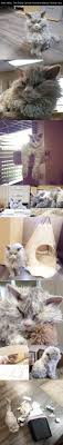 1000 images about Cats Dogs on Pinterest Kitty cats Cute.