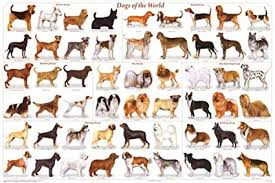 Dog Breed Chart With Names Dogs Of The World Popular Breeds Chart Poster 36 X 24 By