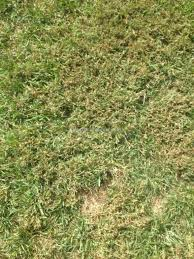trugreen lawn care review from ozark missouri