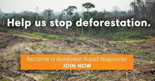 how many trees are cut down every year rainforest action network
