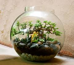 Glass Bowl Decoration Ideas home improvement ideas ozziesterrariums 11
