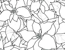 poinsettia coloring page drawing book pages kid books pdf