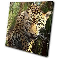 leopard jungle big cat africa animals