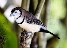 Prit gantil lagu mp3 download from mp3 ssx last update jan 2021. Berapa Harga Burung Emprit Cek Harga Termurah Sekarang Juli 2021 Daftar Biaya Tarif