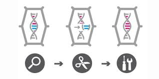 Genome Editing Crispr Talen Zinkfinger Wie Funktioniert Genome Editing