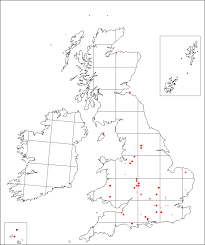 Silene armeria | Online Atlas of the British and Irish Flora