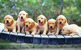 Download puppy laptop backgrounds HD ...