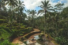 Fotobehang Palmbomen Haal De Tropen Naar Binnen 123fotobehang