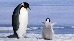 cute baby penguin wallpaper.  Baby Penguin Parrent And Baby Wallpapers HD  Desktop Mobile  Backgrounds To Cute Wallpaper L
