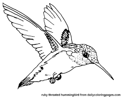 Small Picture hummingbird coloring page printable color picture hummingbird